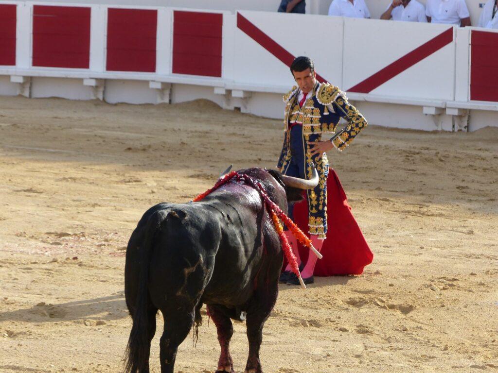un homme face à un taureau