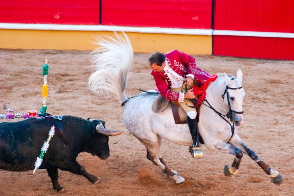 Un cavalier à cheval et un taureau