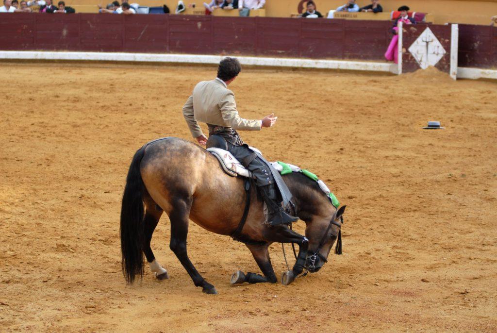 un cheval à genoux