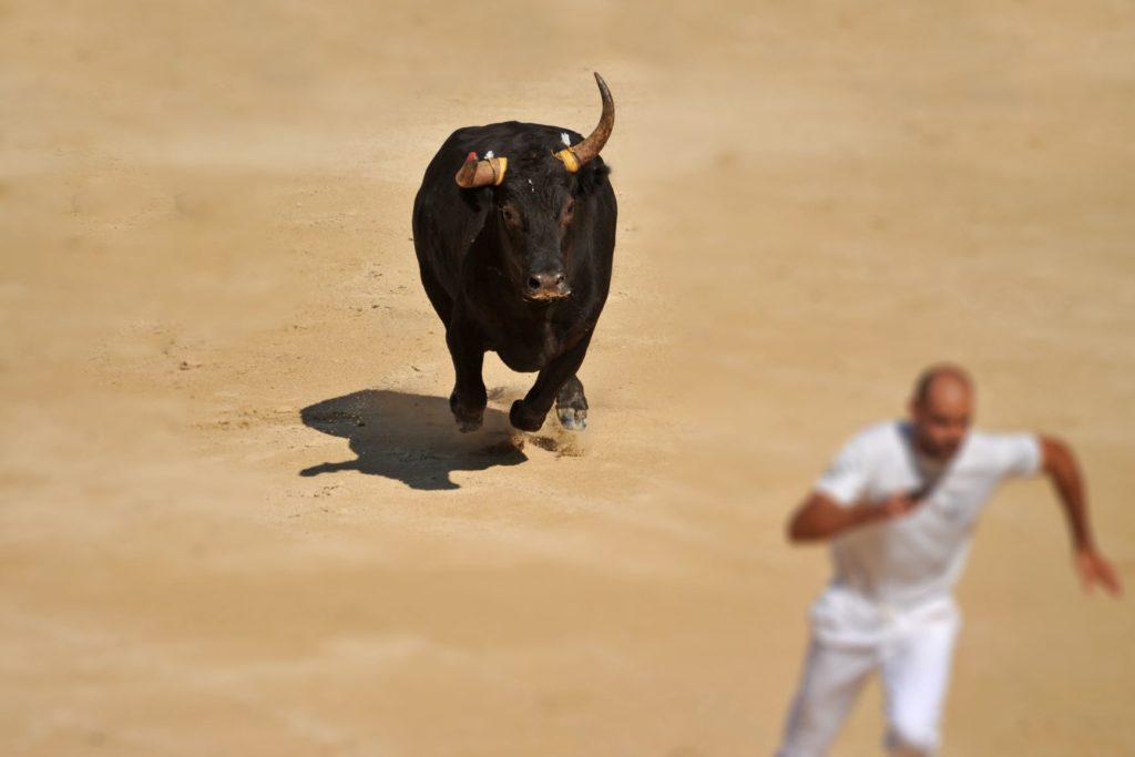 un homme court devant un taureau
