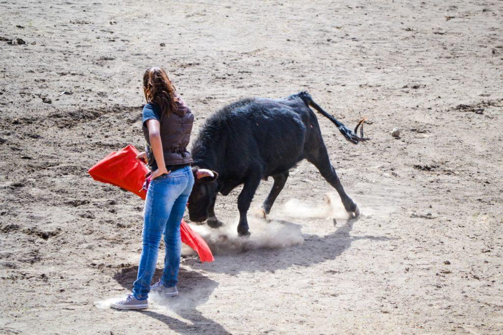 ene adolescente face à une vache