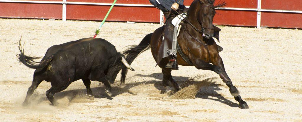 un cavalier et un taureau