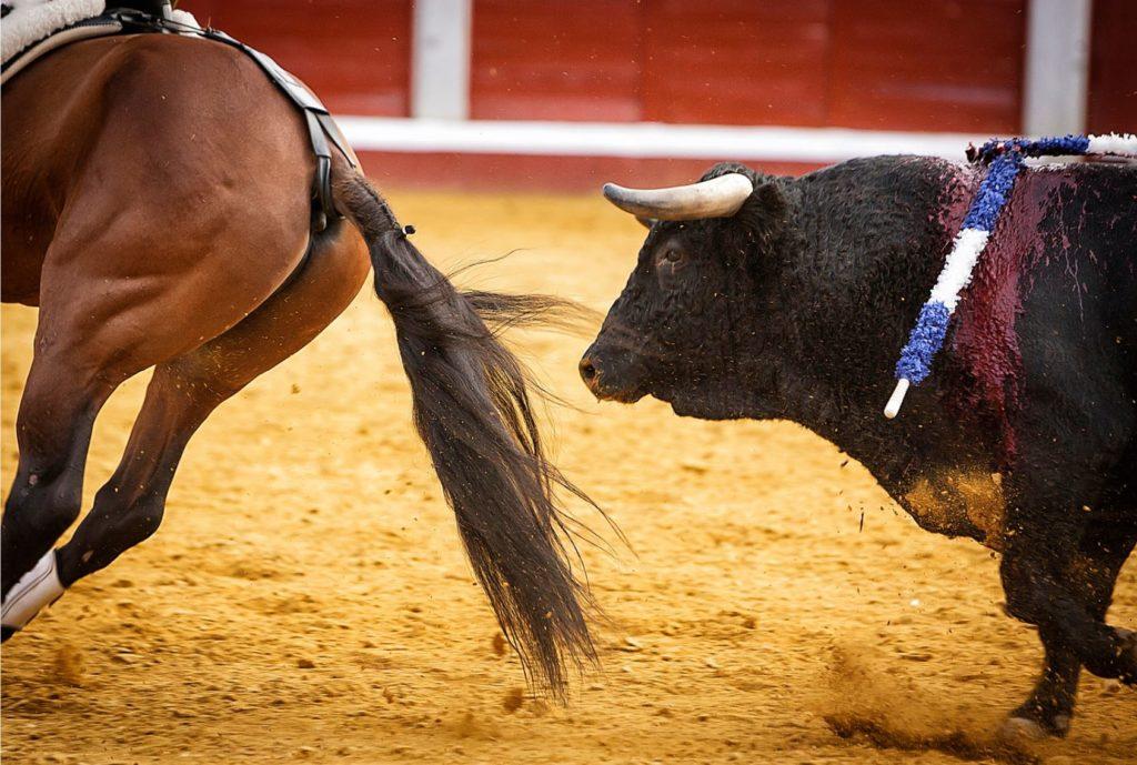 un taureau et un cheval