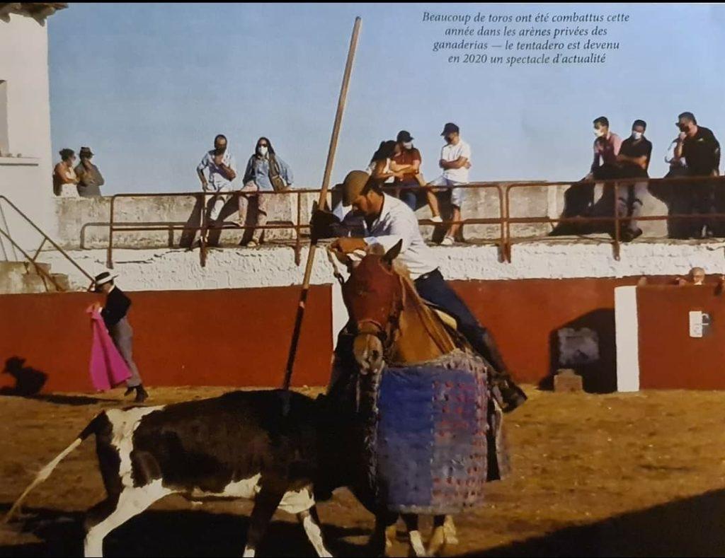 un homme a cheval et un taureau
