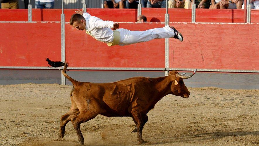 un homme au dessus d'une vache